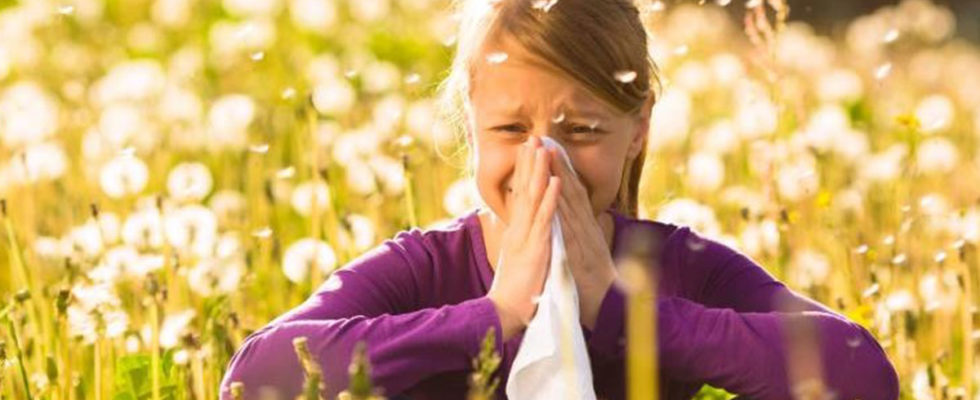 Pollen lösen Heuschnupfen aus
