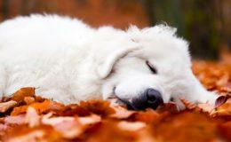 Herbstmüdigkeit schlägt auf die Stimmung
